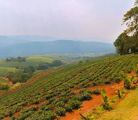Tzaneen, Limpopo, South Africa - hill fields